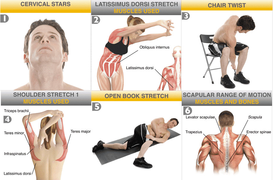 Muscle Building Program For Skinny Guys Pdf Workouts Workout Every Guy The
