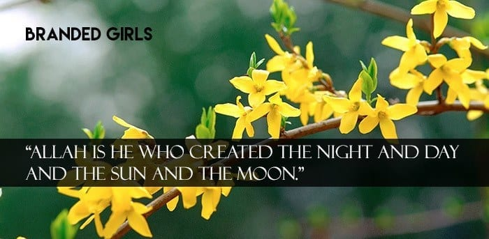 professional_lower_photography_162637 Islamic Cover Photos-30 Best Facebook Covers Photos with Quotations