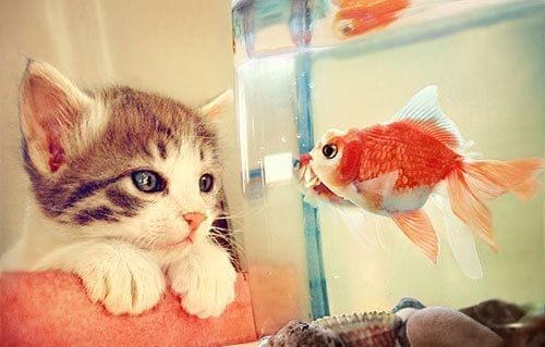 cat-and-fish Beautiful Display Pictures-50 Best Profile Pictures for Facebook