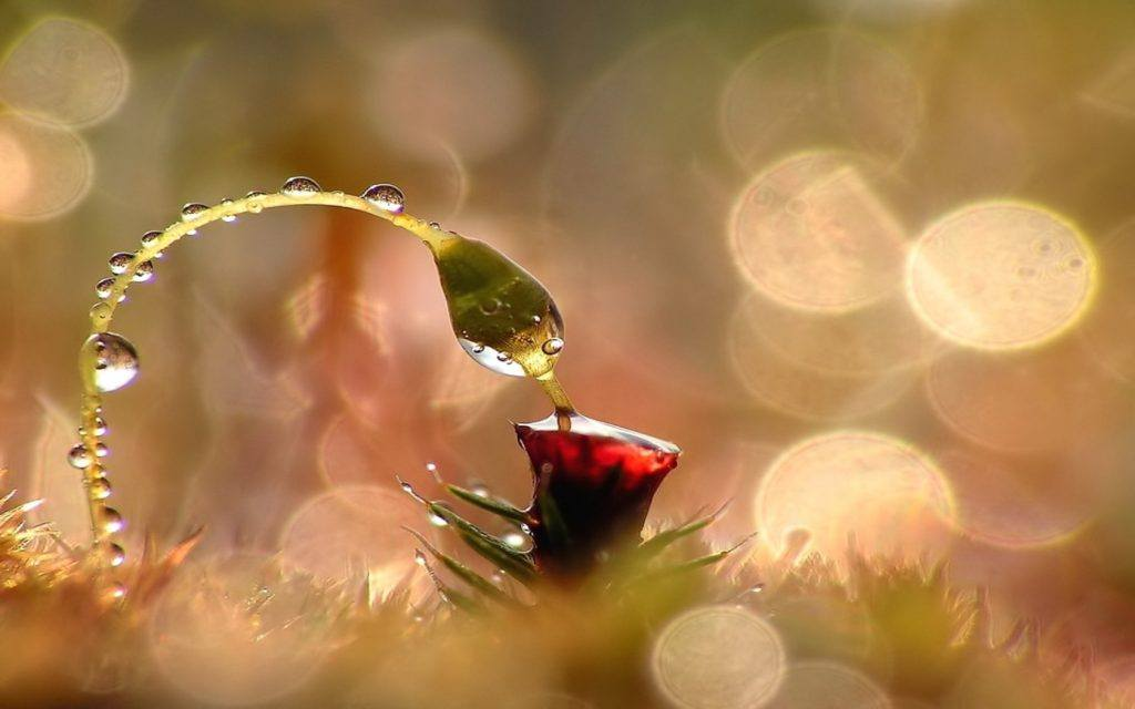 cool-macro-wallpaper-2-1024x640 Beautiful Display Pictures-50 Best Profile Pictures for Facebook