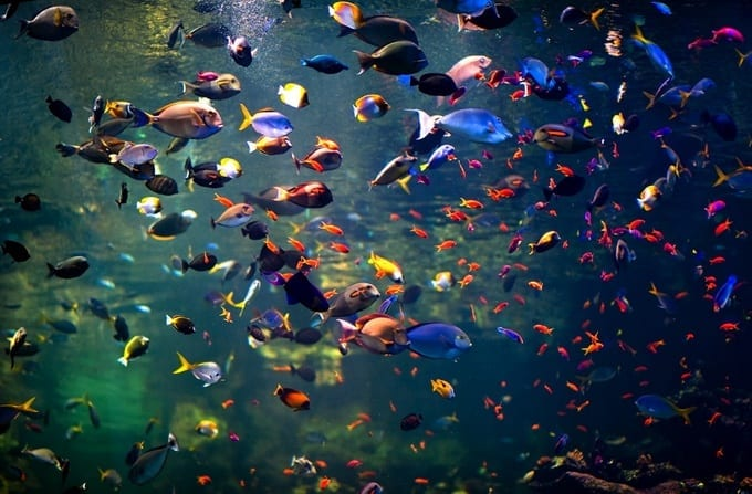 fishes Beautiful Display Pictures-50 Best Profile Pictures for Facebook