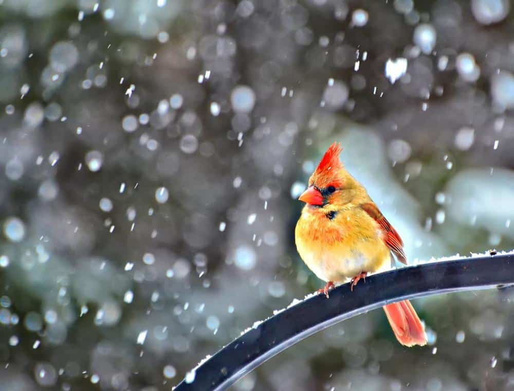 snowbird-by-jeff-clow Beautiful Display Pictures-50 Best Profile Pictures for Facebook